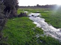 rivera 2007 (14)