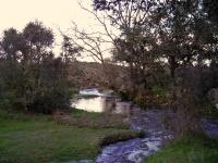rivera 2007 (17)