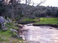 rivera 2007 (18)