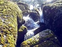 rivera 2008 (2)