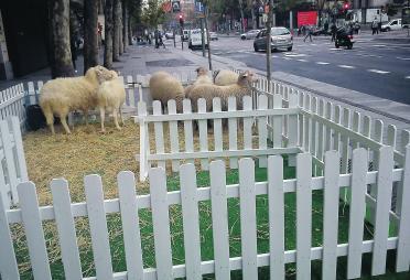 Ovejas en la Calle Serrano de Madrid